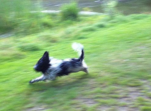 Ich renne so schnell, da wird sogar dem Foto- apparat schwindelig und die Fotos unscharf.