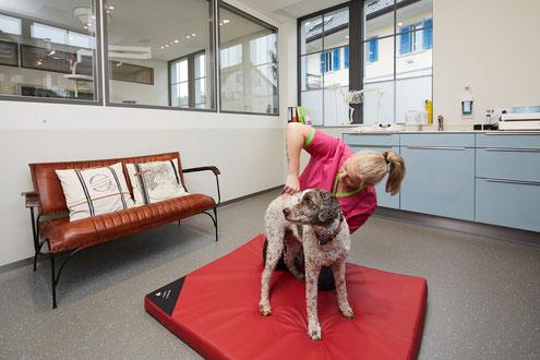 Behandlungszimmer 2 Tierarztpraxis zur Schmiede