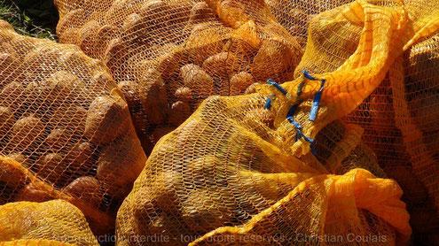 Sacs de pommes de terre après ramassage par les bénévoles de l'Association la Cueillette de Quinsac