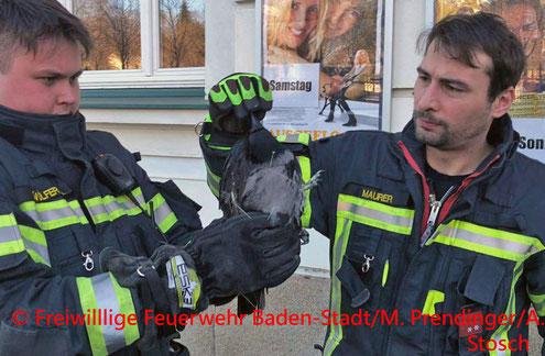Feuerwehr; Blaulicht; FF Baden; Krähe in Not;