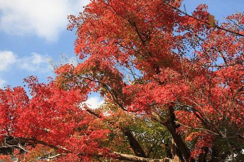秋の法要の際の紅葉