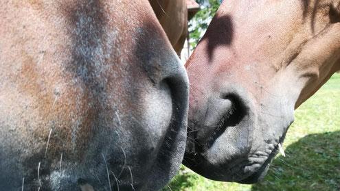 Freunde fürs Leben, Pferde-Freundschaften