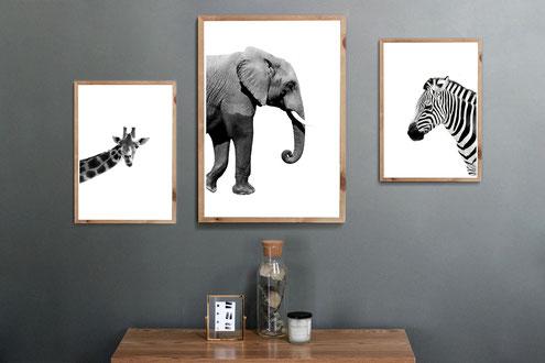 4one pictures - tier poster - tierische bilder - elefant - giraffe - zebra - süße tier bilder - kinderzimmer - wohnzimmer fotos - a4 a3 poster