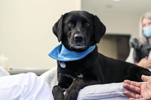 Mila - Besuchshündin auf der Palliativstation