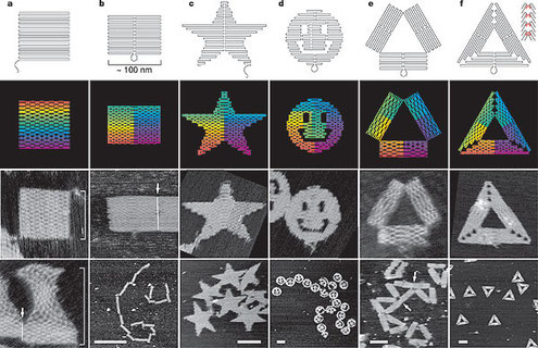 © 2006 Nature Publishing Group  Folding DNA to create nanoscale shapesand patterns (PWK Rothemund)