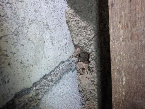 住宅床下のシロアリ蟻道