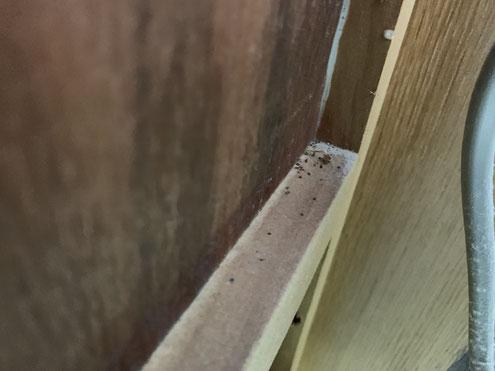 チャオビゴキブリの糞