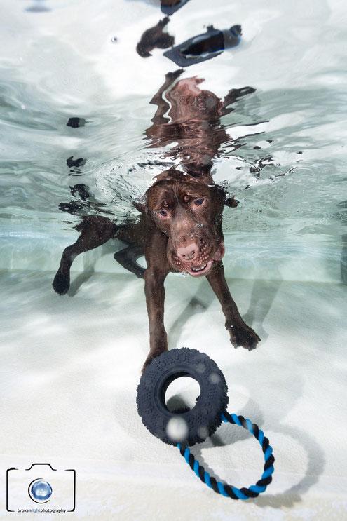 Bild: Hund unter Wasser Foto Berlin