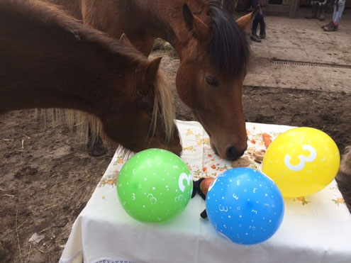 Pferde Party Maria Kollner Autorin Journalistin Seminarleiterin
