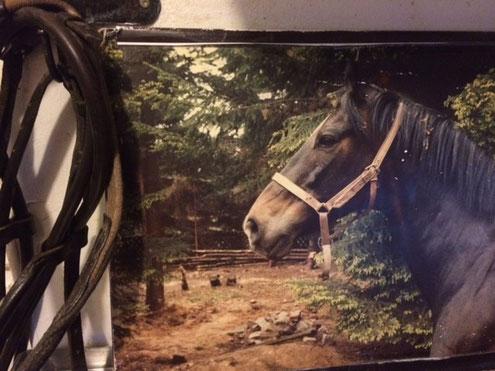 Ein Foto von Nobody, der eigentlich, Miravan hieß, daneben seine Trense.