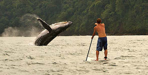 Walbeobachtung am Pazifik in Kolumbien