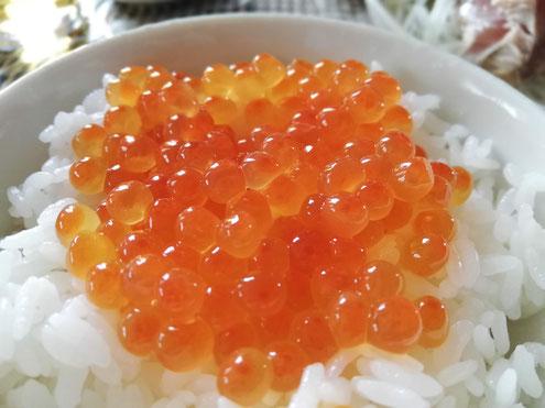 自家製いくらの醤油漬けで朝ごはんです。北海道に秋が来ました。今年は比較的安いようです。