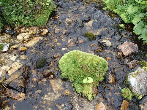 源流の小川