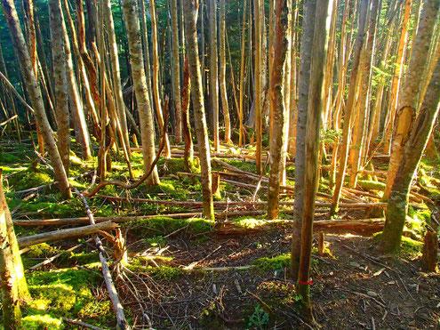 森に朝日差す