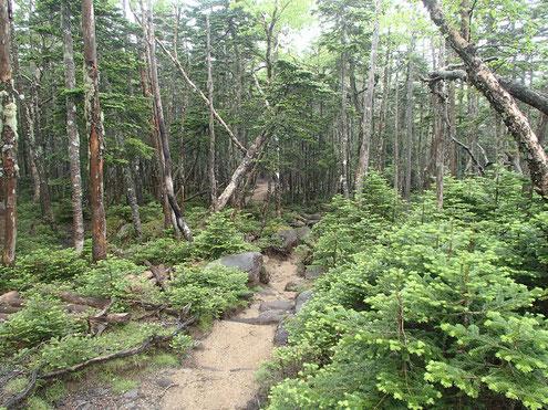 国師ヶ岳付近 一般登山道