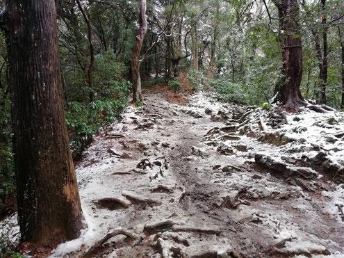 高尾山で雪を踏む