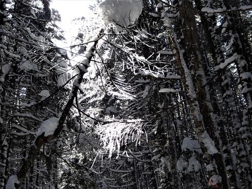 輝く木の枝