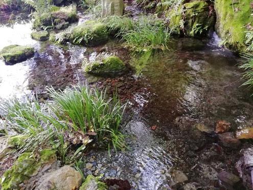 上西條神社・一の池
