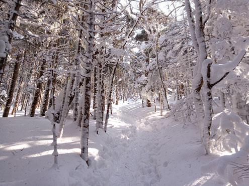 樹林を進む