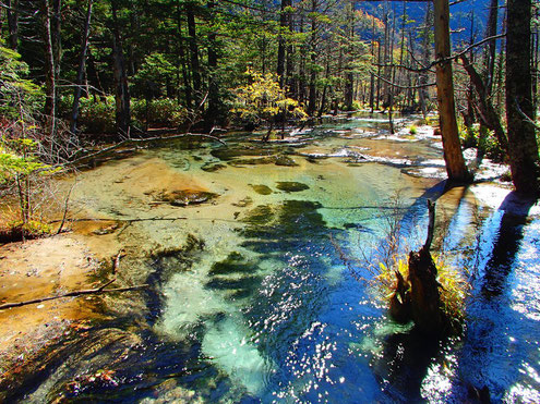 岳沢下部の湿地