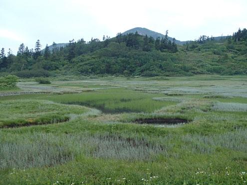 朝の高谷池