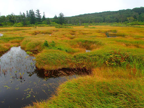 神仙沼の高層湿原