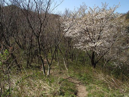 春の登山道
