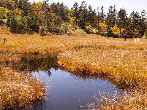 最後の田代と池塘