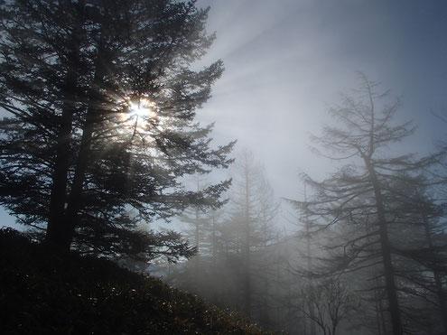 薄霧に光差す