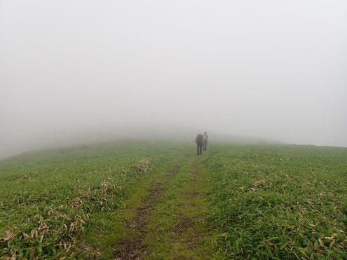 霧の中を行く