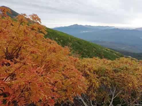 ナナカマドの紅葉と北アルプス