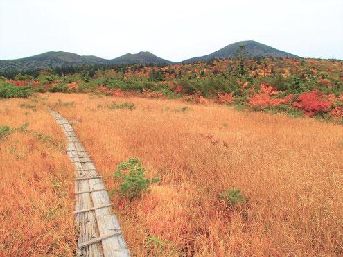 毛無岱と北八甲田の山々