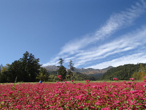 赤ソバ畑と御嶽山