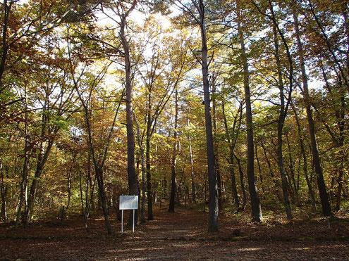 溶岩樹型の森
