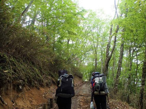 林道を進む