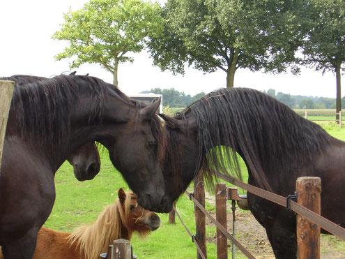 Wat is belangrijk voor het paard