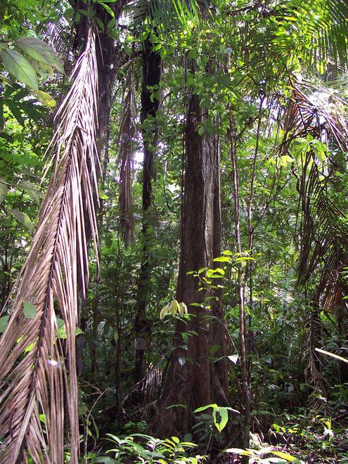 Amazonas Touren in Peru, mit PERUline in den tropischen Regenwald