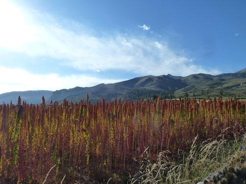 Wandern in Peru gibt den Blick auf faszinierende Landschaften frei