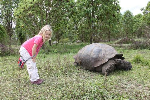 Reisen durch Peru und Ecuador und auf die Galapagos Inseln