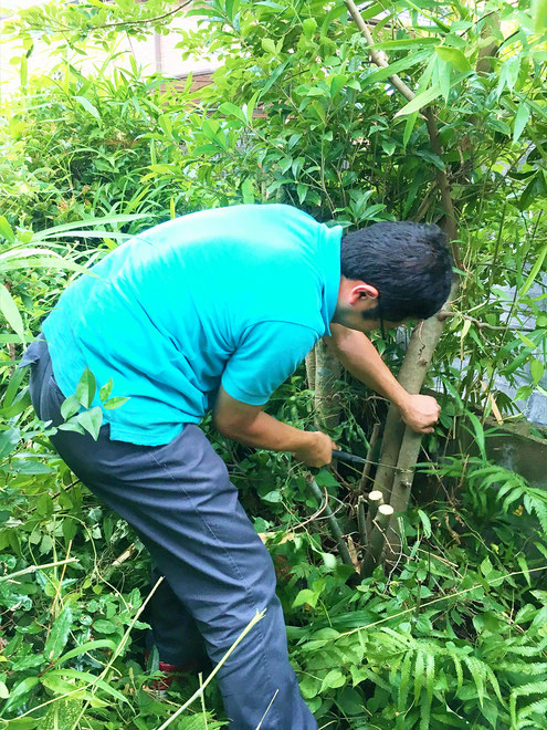 木を伐採しているところの写真