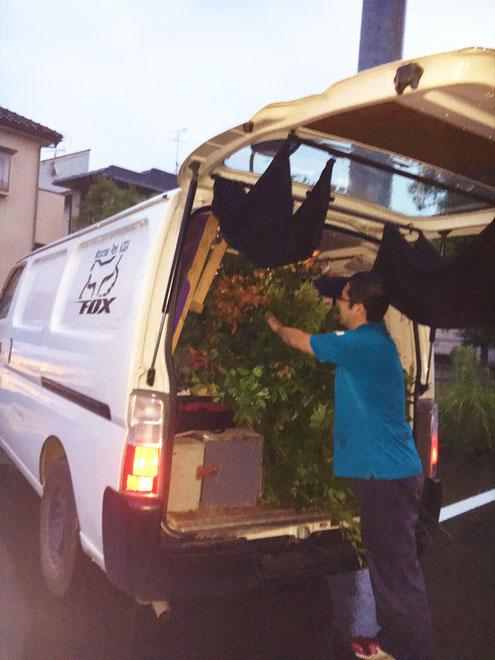 木を処分しているところ