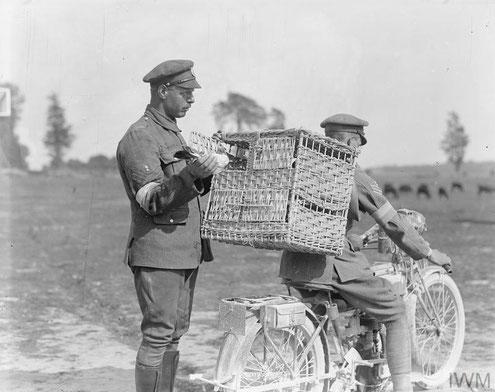 Brieftaubentransport per Motorrad in die vorderen Frontlinien des britischen Militärs 1. Weltkrieg