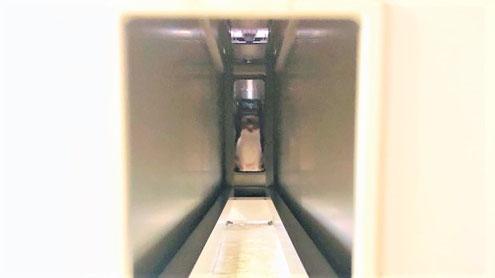 弊社内のトンネルに潜むタマスケ