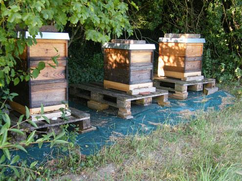Bienen Behausung am Waldrand