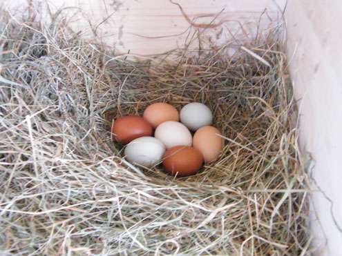 Bunte Eier von den glücklichen Hühner