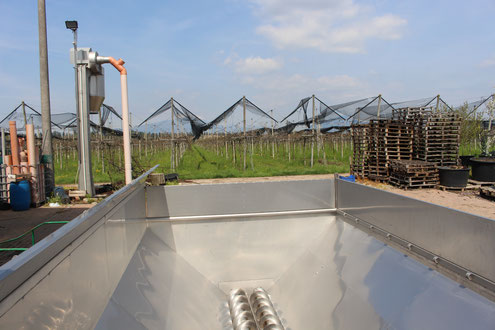 Auffangbehälter Weintrauben Cola Lazise