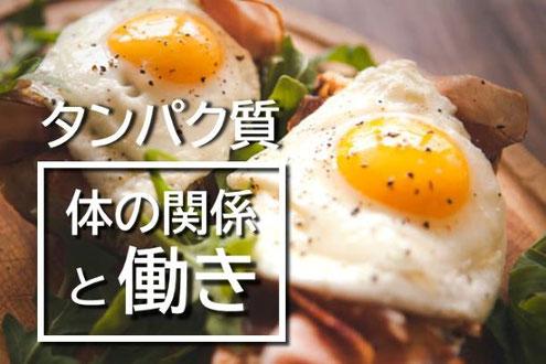 神戸のパーソナルトレーニング 元町 三宮 苦楽園 芦屋 タンパク質の関係と働き