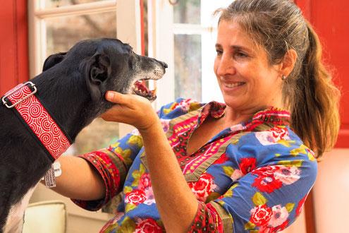 Rescued greyhound galgo