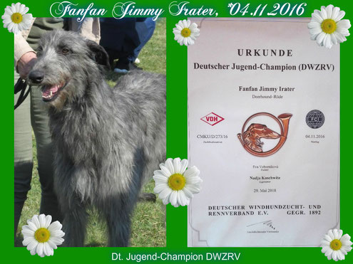 SCOTTISH  DEERHOUNDS vom VDH Züchter Nähe Schweiz/Belgien/Luxemburg/Niederlande! Wir planen unseren neuen Deerhound Wurf 2018!