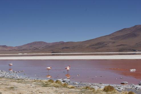 Fahrt über den Salzsee von Bolivien nach Chile